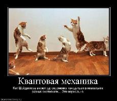 Котката на Шрьодингер