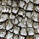 дървесна кора